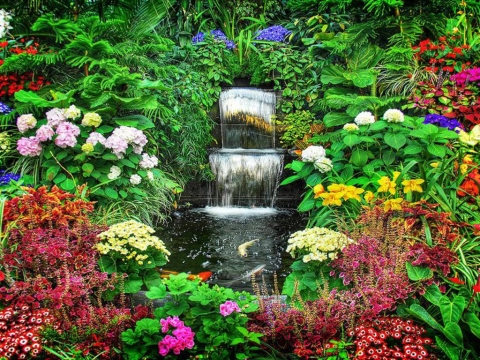 Using Filtered Water to Grow Bigger Plants and Flowers Picture